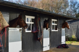 Some of the horses