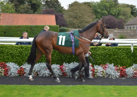Breeding: Dapper (GB) – Lonely One (GB) (Perryston View (GB)) Owner: Mr Christopher Davies Breeder: Nunstainton Stud