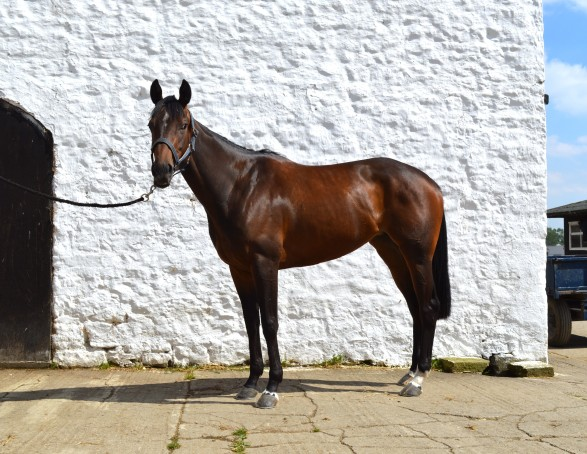 Breeding: Dapper (GB) - Bedtime Blues (GB) (Cyrano de Bergerac (GB)) Owner: Mr J J Davies Breeder: Mr T C Dawson (Nunstainton Stud)